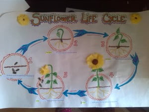 LIFE_CYCLE_POSTER